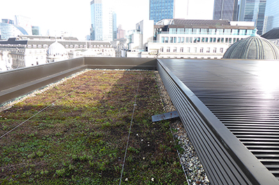 Green Roof Leak detection